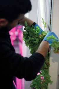 """Greens sprout in """"growing towers"""" inside the container."""