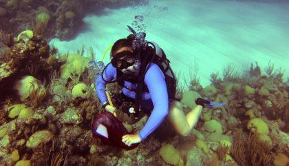 Hannah Reich dives in Bermuda.