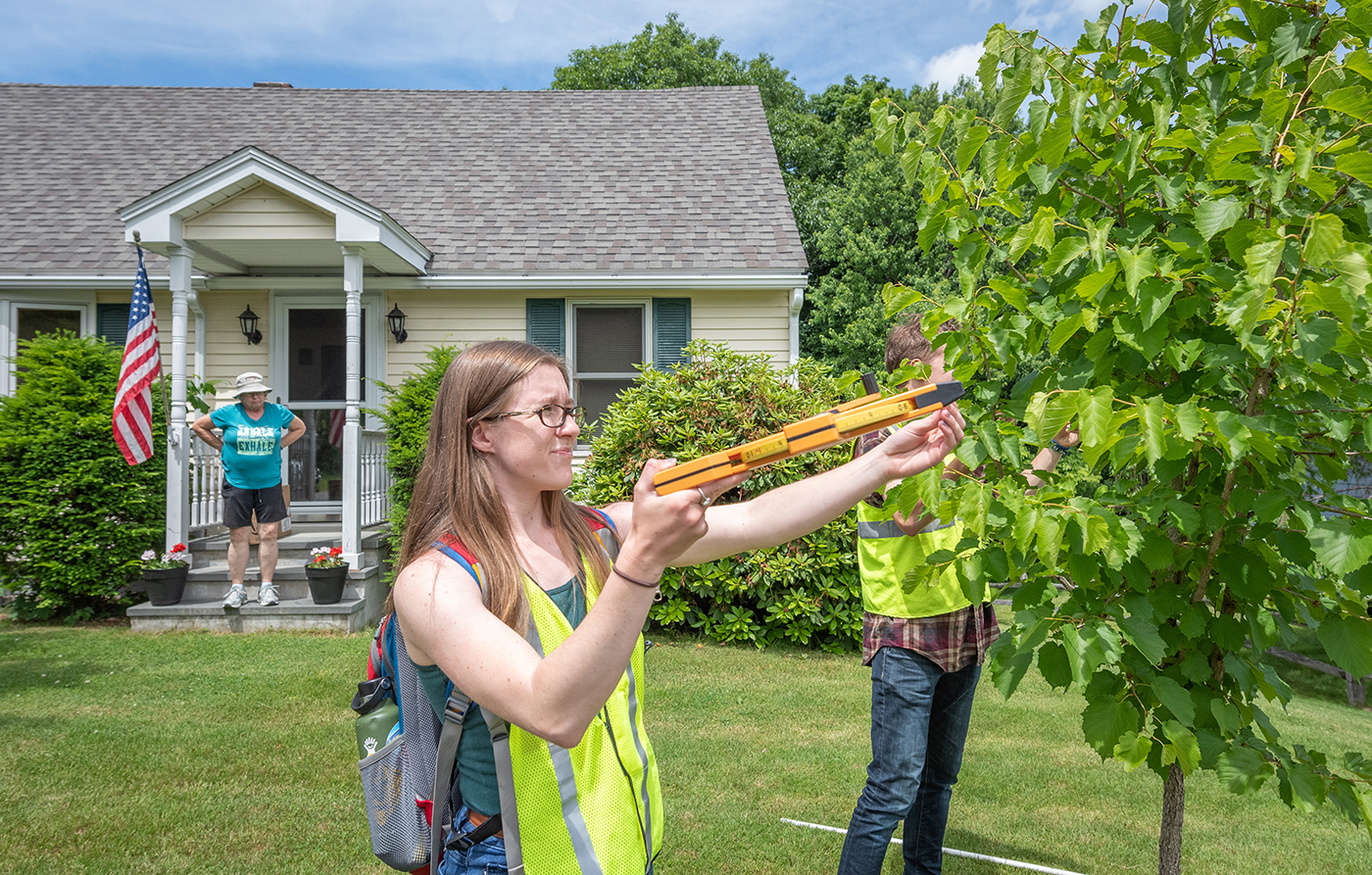 HERO Fellows assess the health of a tree in Leominster,